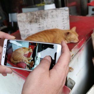 全面進化!系列拍照最強的紅米 Note 5 開箱 + 猴硐貓咪實拍分享 @3C 達人廖阿輝