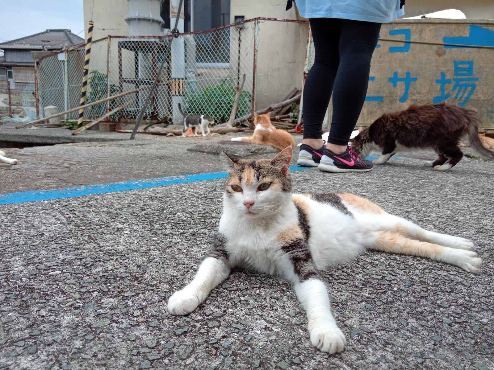 滿滿的貓貓貓貓!HTC Desire 19+ 挑戰日本著名貓島『青島』!實拍分享+旅行攻略貓貓 @3C 達人廖阿輝