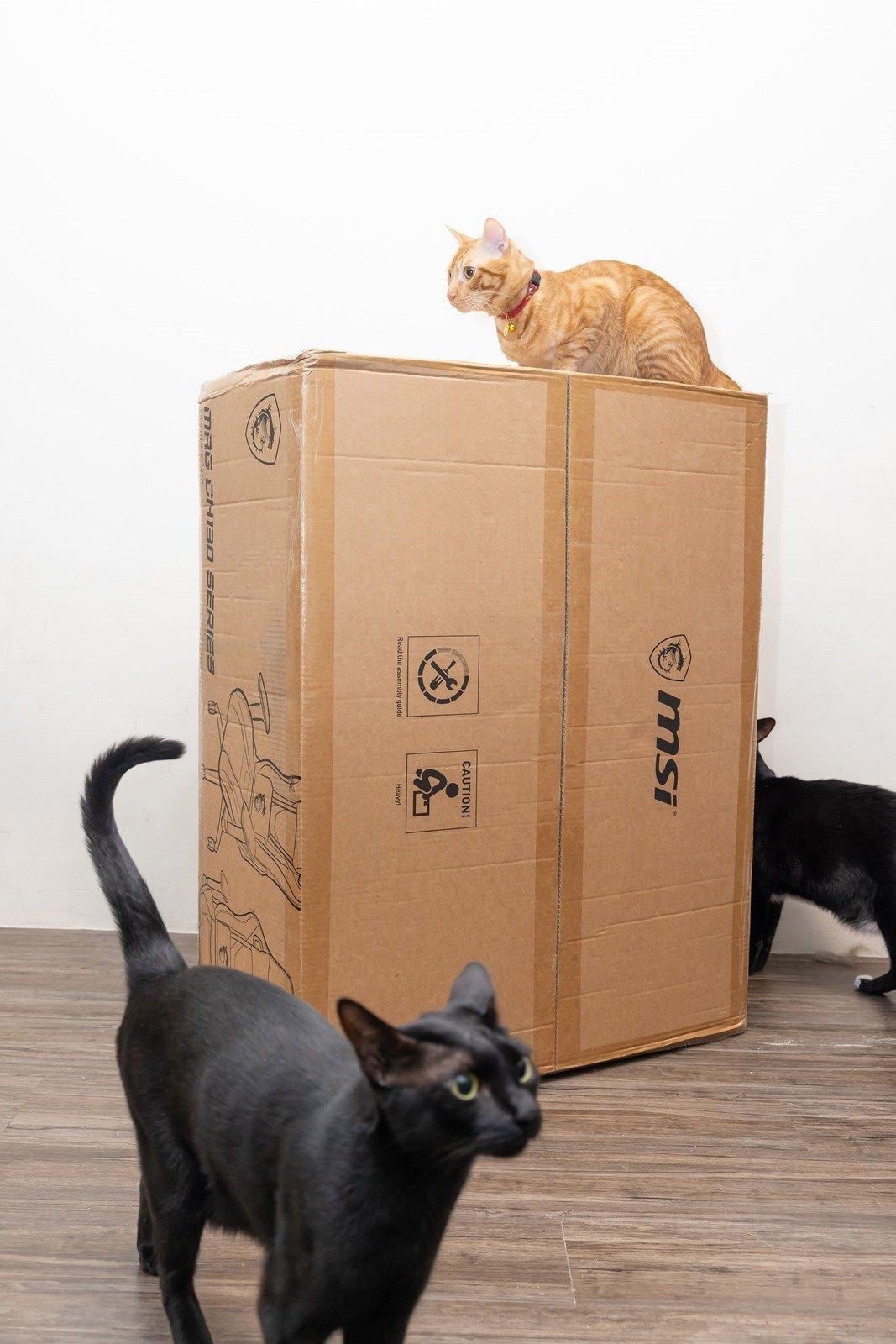 有貓就給讚!加上防貓抓的電競椅!MSI 微星 MAG CH130 I REPELTEK FABRIC 防水電競椅 @3C 達人廖阿輝